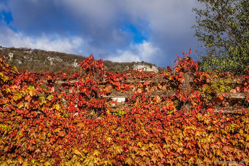 Enredadera con los colores del otoño