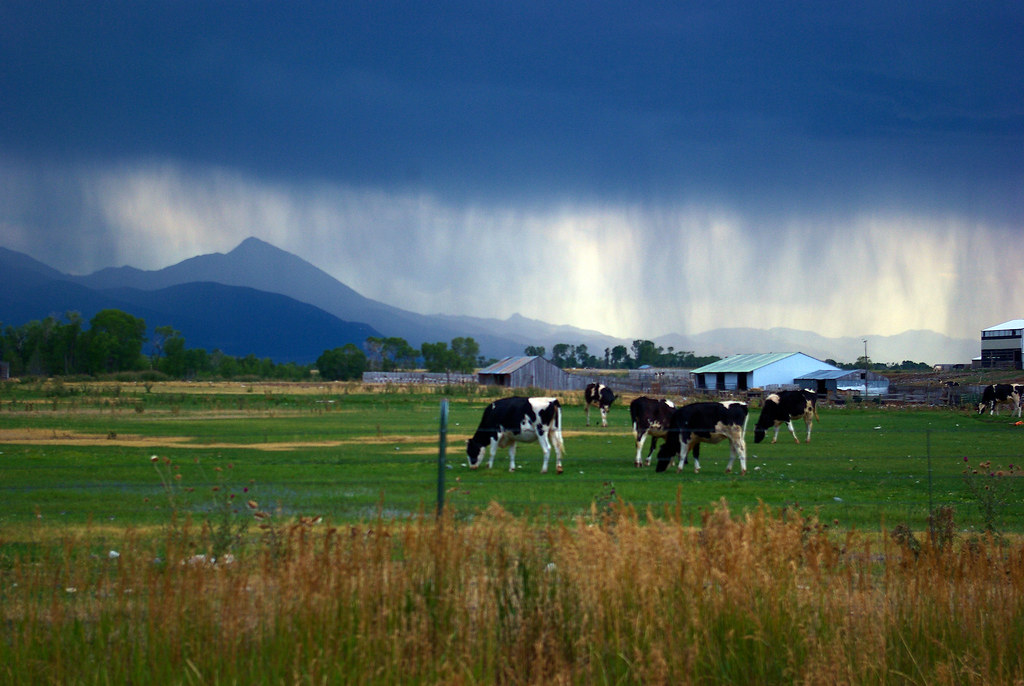 Stormy weather over a pasture and the Absaroka Range at Livingson, Montana KOA (across the Yellowstone River), August 3, 2010 (Pentax K10D)