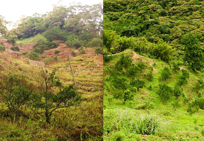 左邊:使用除草劑,土地一片貧瘠;右邊:施行環境友善農法,保留豐富生態環境