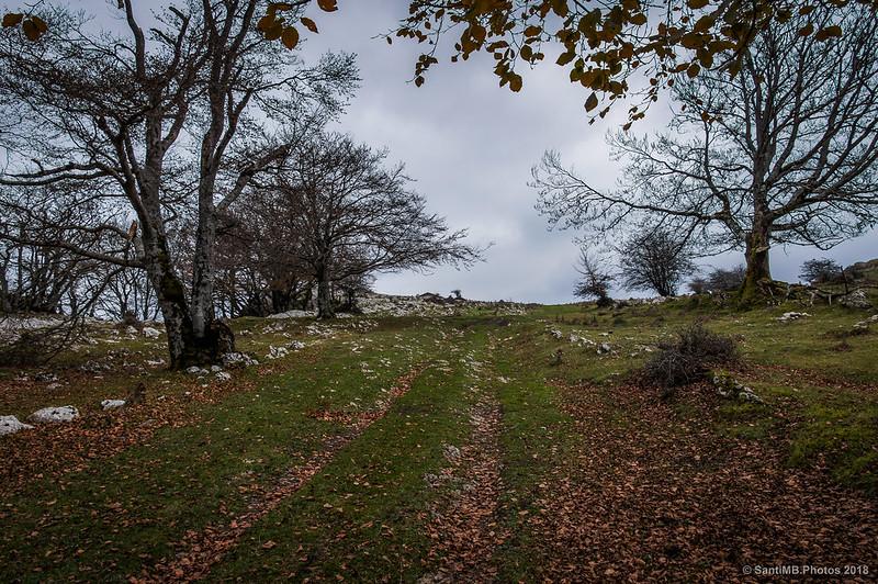 Camino del bosque cerca de San Adrián de Lizarraga