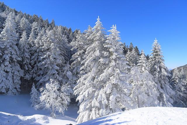 冬の八ヶ岳の樹氷