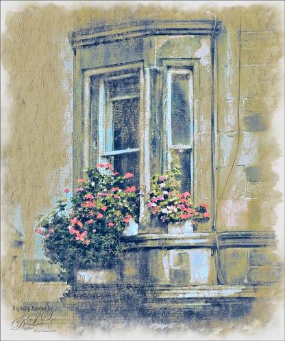 Image of flowers on a window ledge in Edinburgh, Scotland
