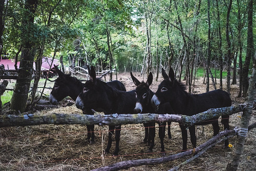 DSC03787 | by Camilla Pop