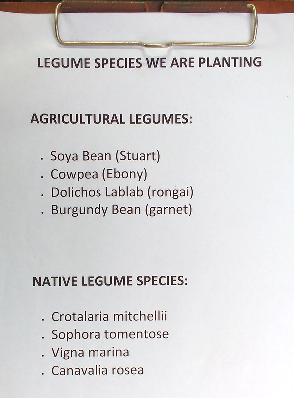 legume species list