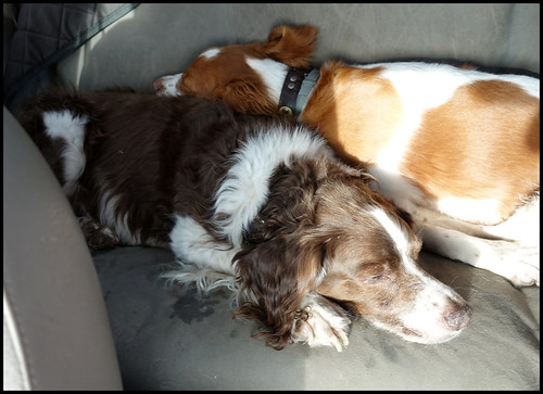 1-3-18 - Tired dogs on the way home in the Jeep | by greghartman271