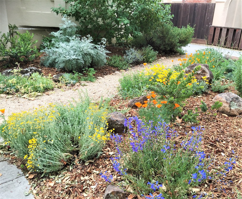 ... Front Yard With Walkway   Jeff Silva   Edited | By CA Native Plant  Society