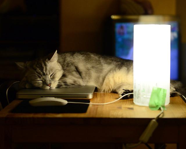 Gatito durmiendo tranquilamente frente a una lámpara de mesa