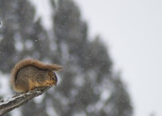 Squirrellacidle | by andrew.r.kirksey