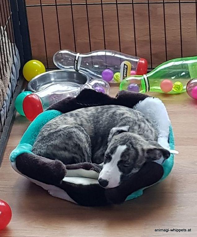 Im Spielzeugstoffwürfel schläft es sich gemütlich!