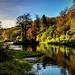 Autumn Upper Lake (Ian Michael, Oct 17)