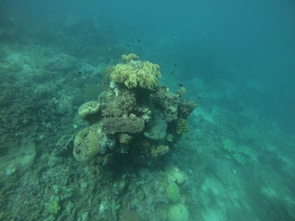 Finding Nemo The Great Barrier ReefFrom Below