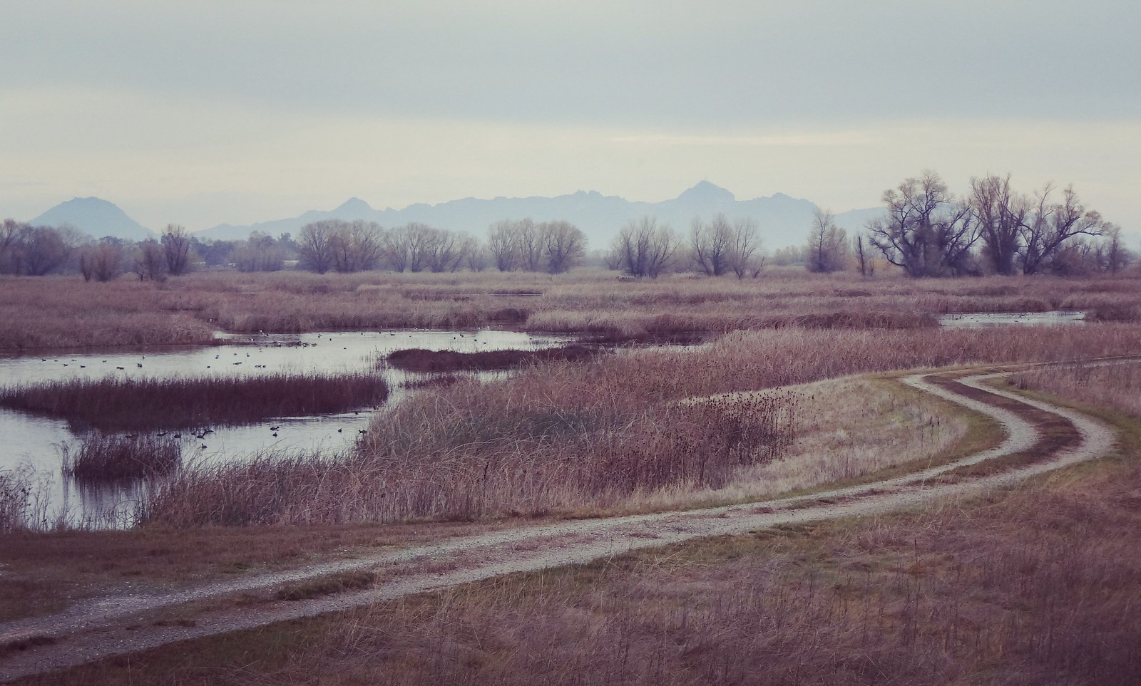 Sutter Buttes in the background | by rickele
