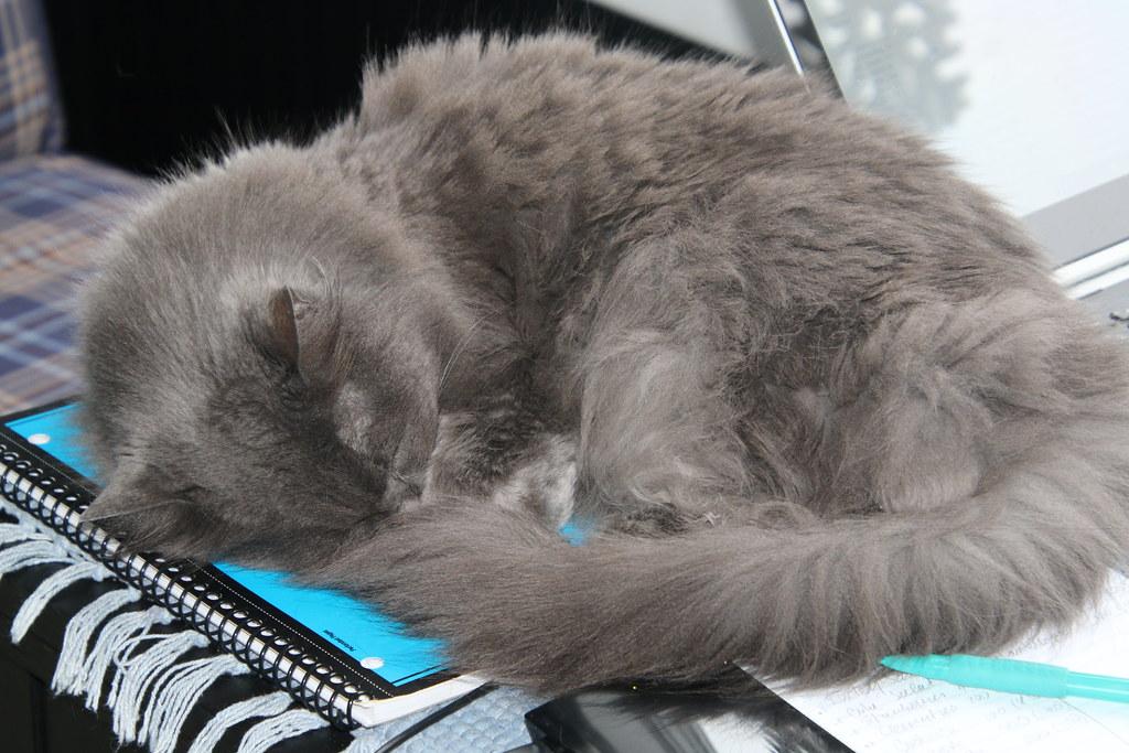 Cat C Write Off Site Www Rac Co Uk