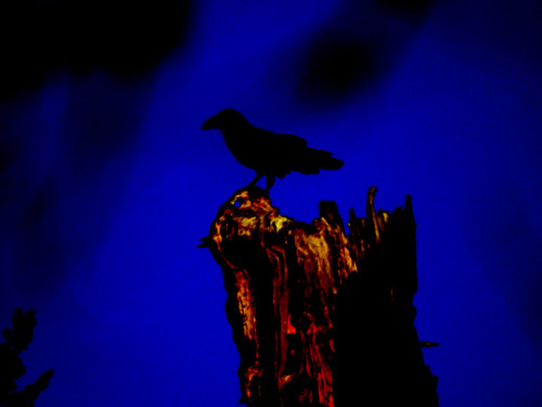 december 20 2017 14:01 - Raven on the stump2 | by boonibarb