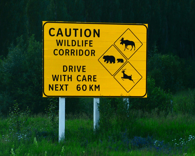 Cartel de animales en libertad en el Parque Nacional de Jasper, en Canadá