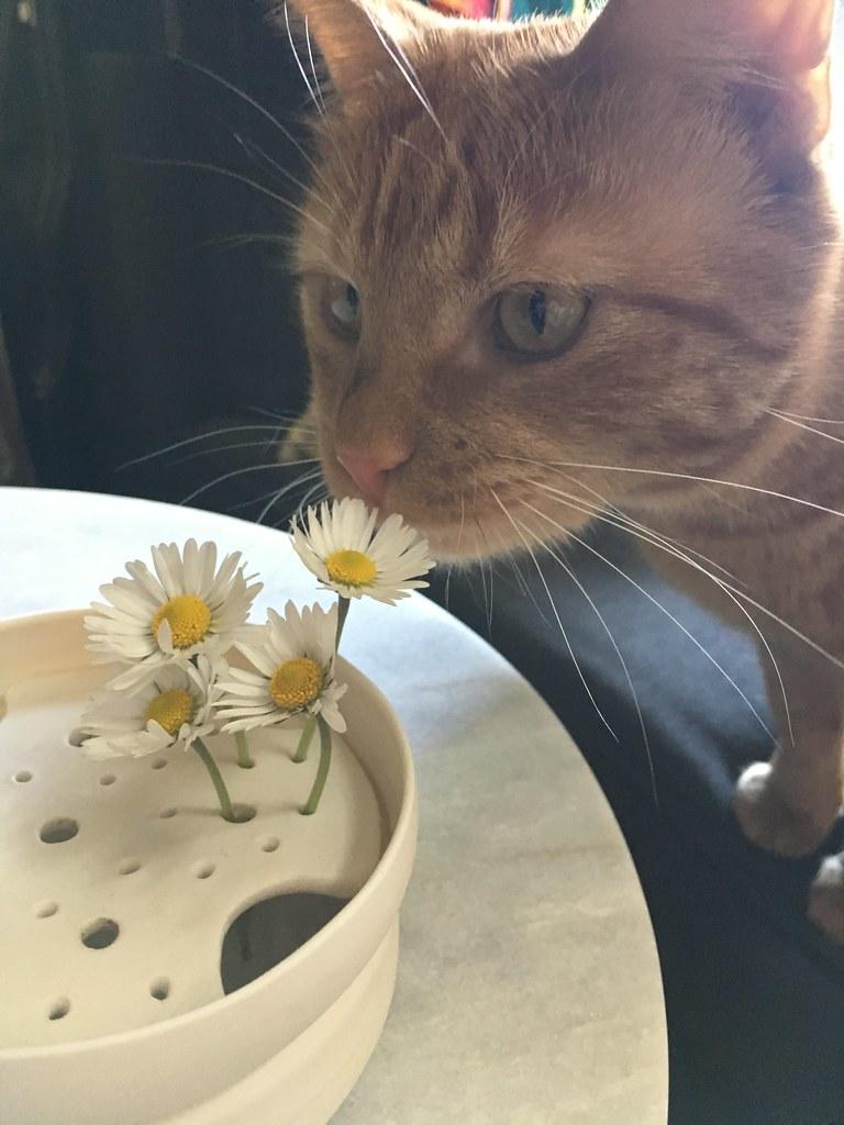 Kitty with daisy ikebana