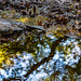 Randol Creek Reflection
