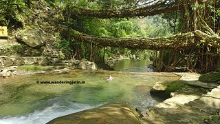 Swimming at Double Decker living root bridge | by wanderingjatin