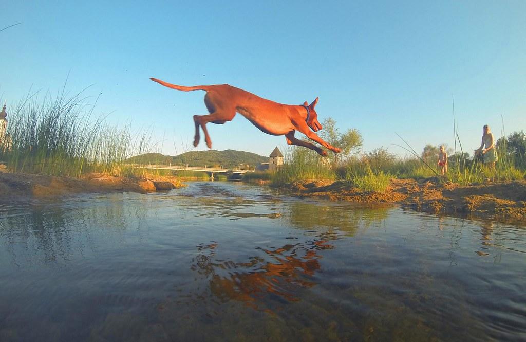 影展主辦人的愛狗凱歐特兼每日網美,在主辦人的FB裡,每日固定發布一張凱歐特在科斯塔伊尼察小鎮奔跑瞬間的照片,並說明:「在邊界」。只見牠日日跨越不同的溪水,或是鑽進不同的農田,循著四季變化,看盡小鎮風情。攝影:Daniel Pavlić。