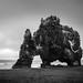Hvítserkur Troll Rock - Iceland