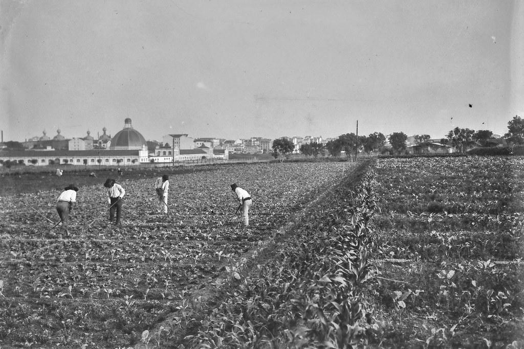 Terreno em Entrecampos, Lisboa (J.Benoliel, c.1910)