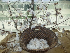 Cotton display in Natchez Visitor Center