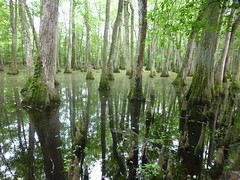 Trees in the swamp