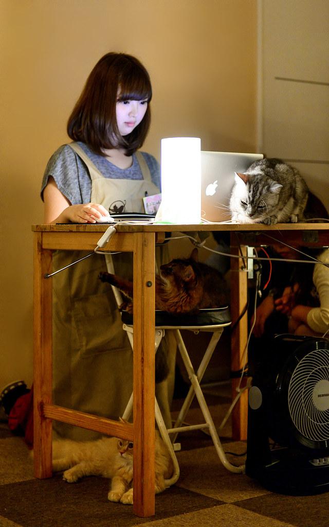 Recepcionista del cafe para gatos que visitar en Tokio