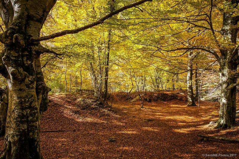Bosque del Nacedero del Urederra