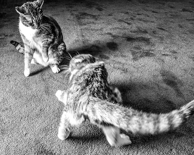 Sugar and Spice not being very sisterly.