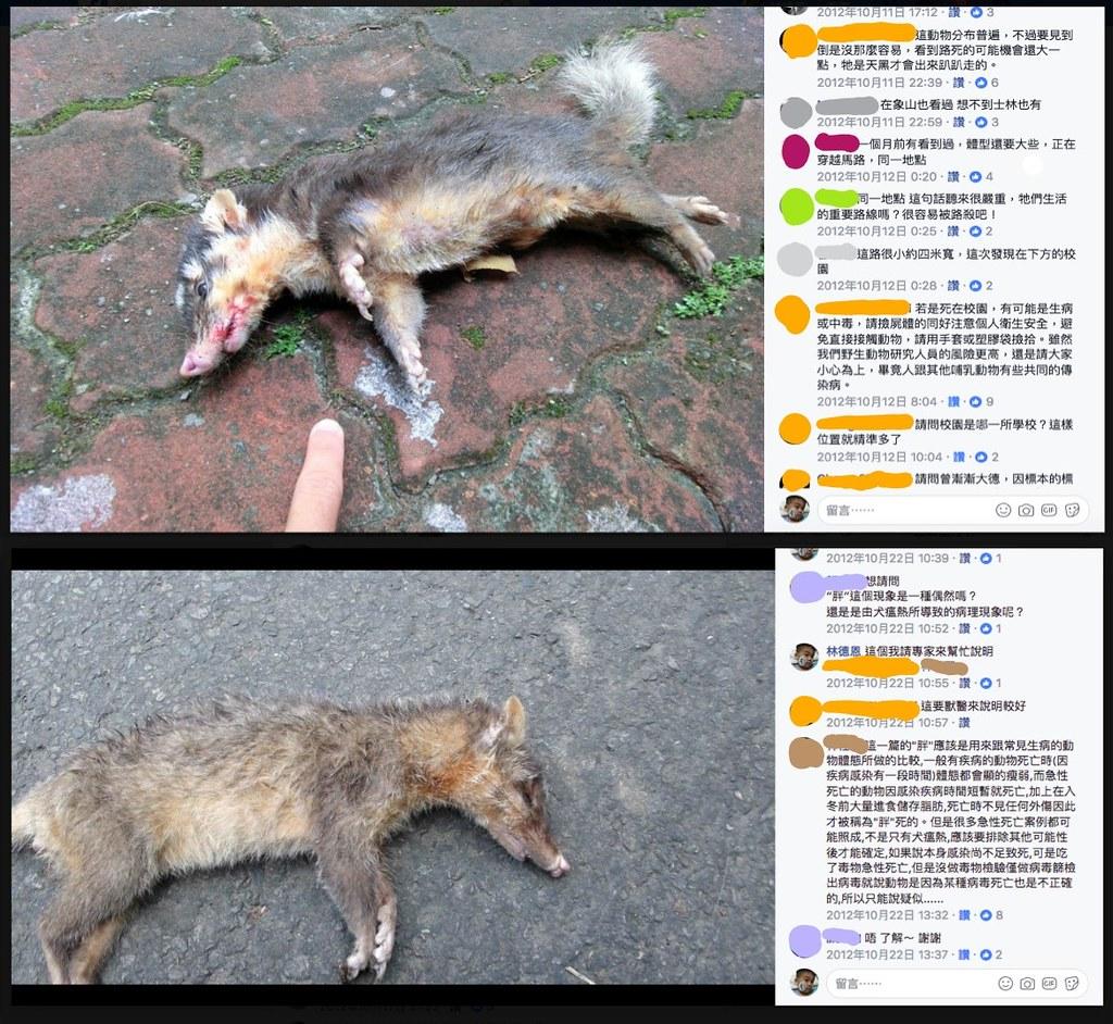 20121012及20121022路殺社有關鼬獾死因討論串截圖