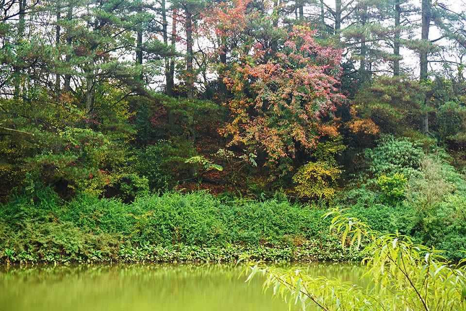 福壽山農場 - 鴛鴦湖