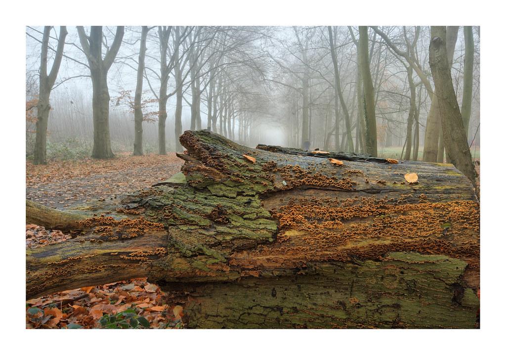 Liesbos woods