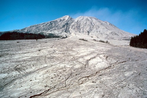 Color image on a sunny day shows Mount St. Helens in the background, rearing against a blue sky. The volcano is a light gray with tan streaks. The foreground of the photo is an enormous fan of mud coming from the volcano, the same gray and tan colors, riddled with streambeds. Green trees border the mudflat. In the center of the mudflat, two groups of bedraggled trees covered in gray ash and mud stand.