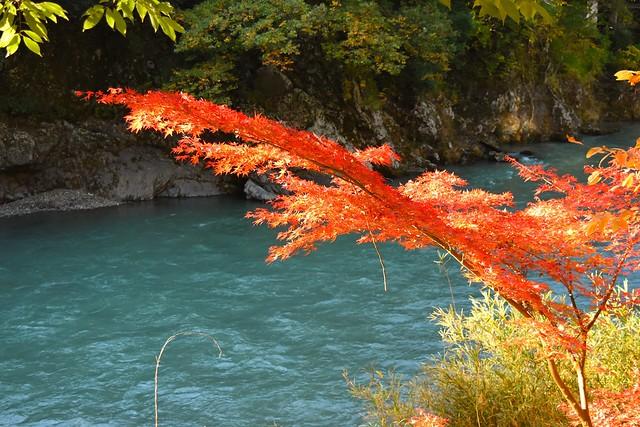多摩川と紅葉