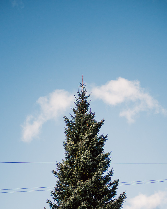 tree and telegraph wires