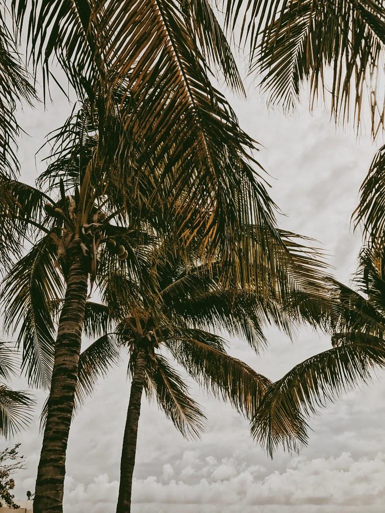 Grand Turk palm trees