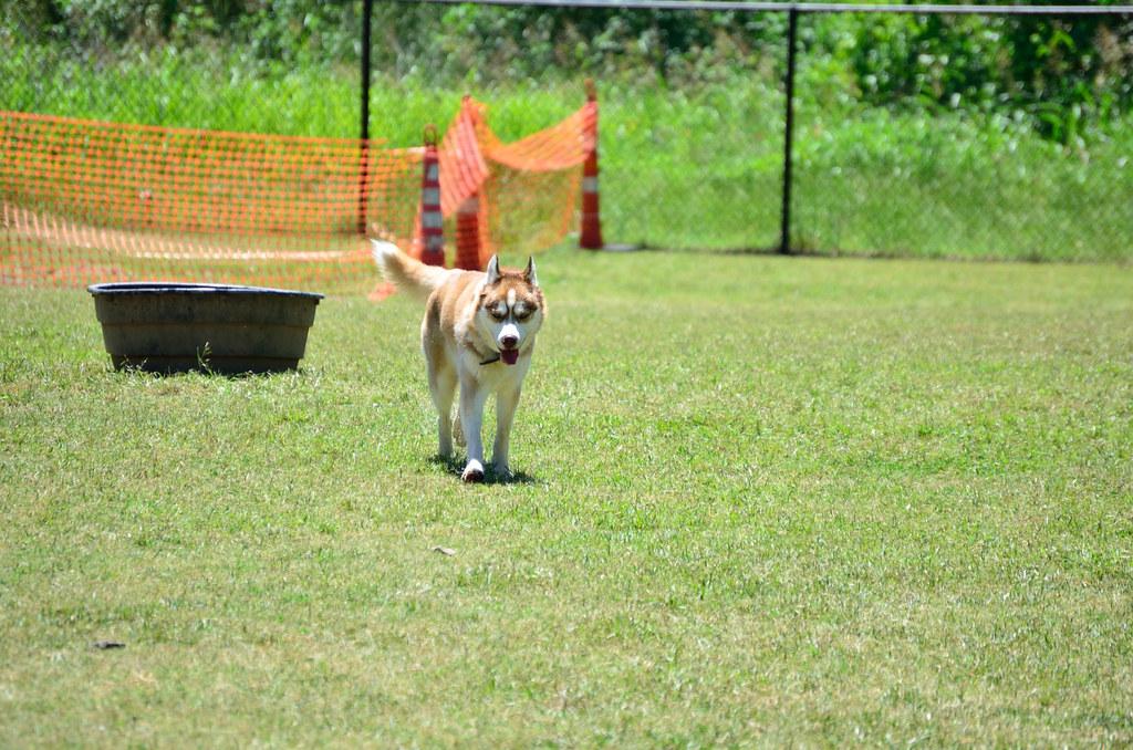 Dog Park Meetup