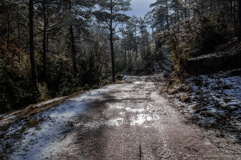 Bosques de Sant Jaume de Frontanyà