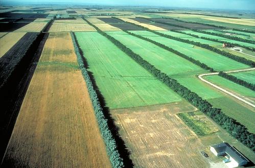 A field windbreak system