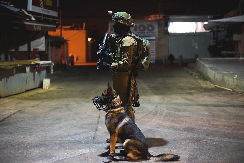 Image Result For Elite Canine Dog