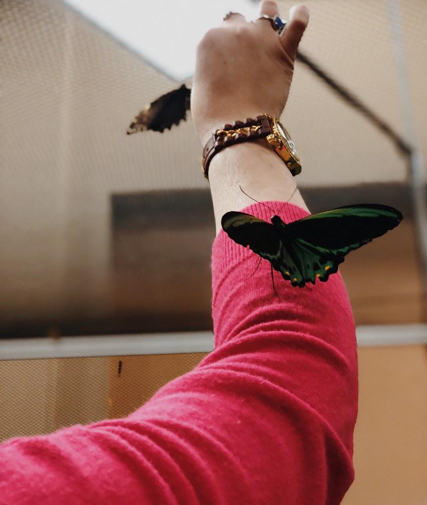 Philadelphia Flower Show Butterfly Experience