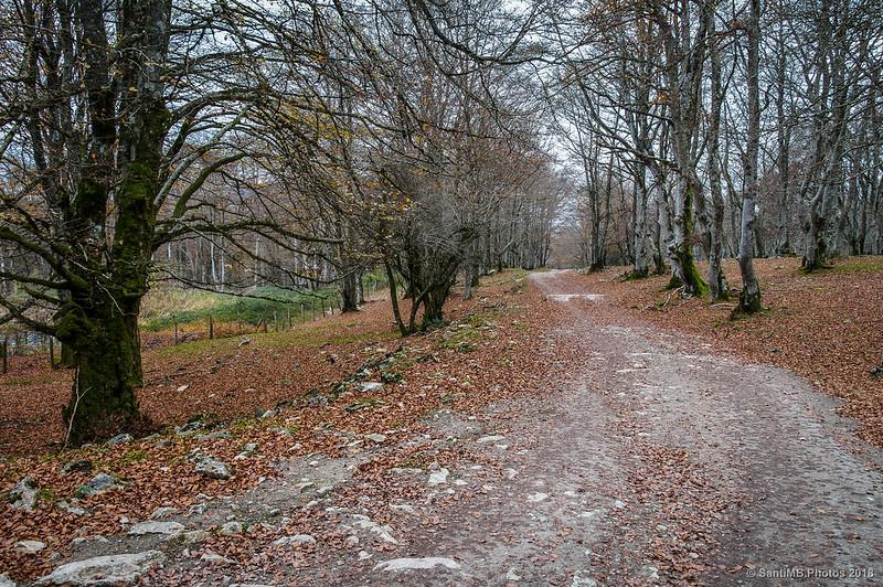 Camino a Eskitza atravesando el bosque