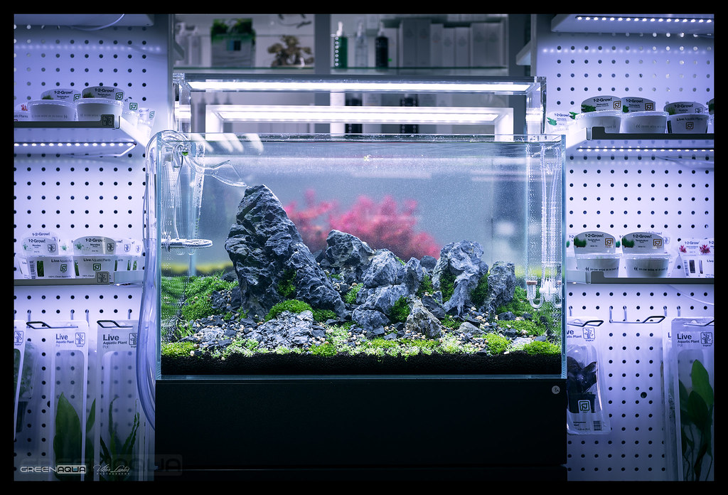 60p aquascape day 1 at green aqua latest photos from our flickr