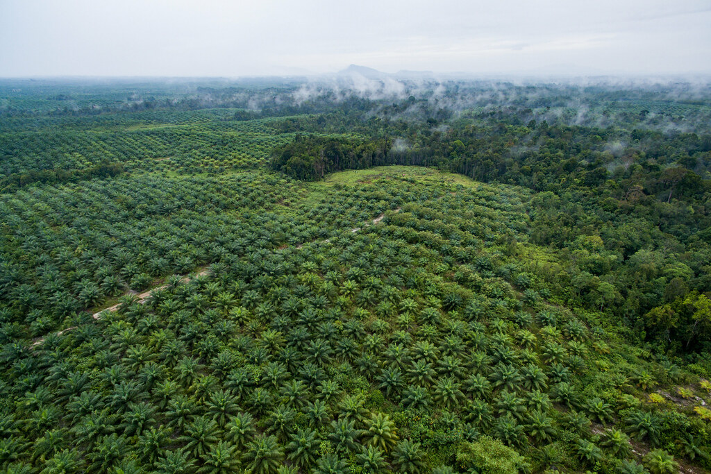 Aerial view of oil palm plantation | Aerial footage of ...
