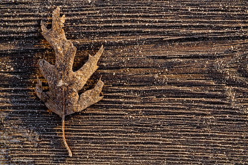 Sunrise on an autumn leaf on the frozen hoar frost covered Kew Beach boardwalk - Toronto | by Phil Marion