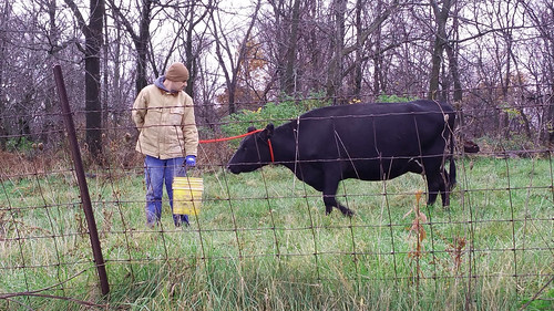 Ryan Kuster with a cow