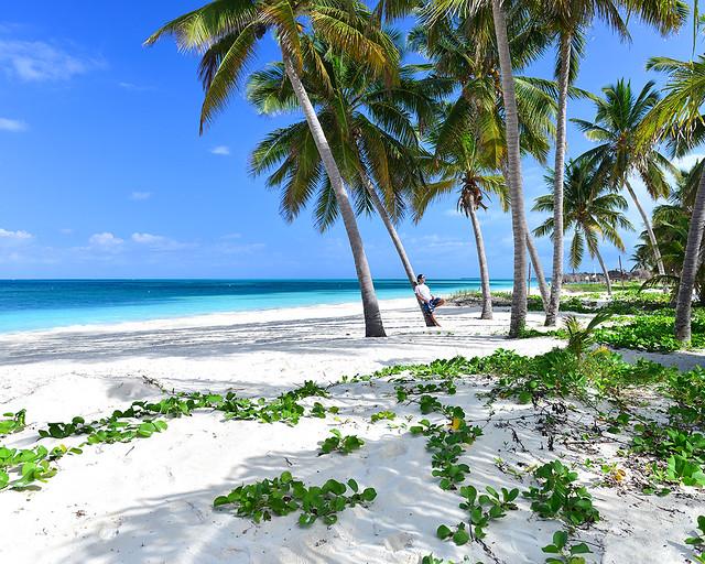 Paisaje de postal de plantas tropicales, palmeras y aguas paradisáicas