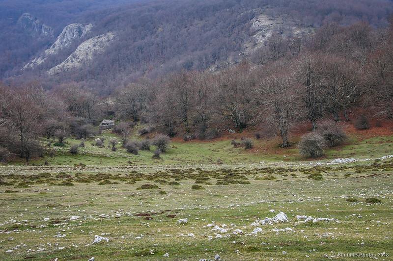 Bosques de Urbasa desde Andía