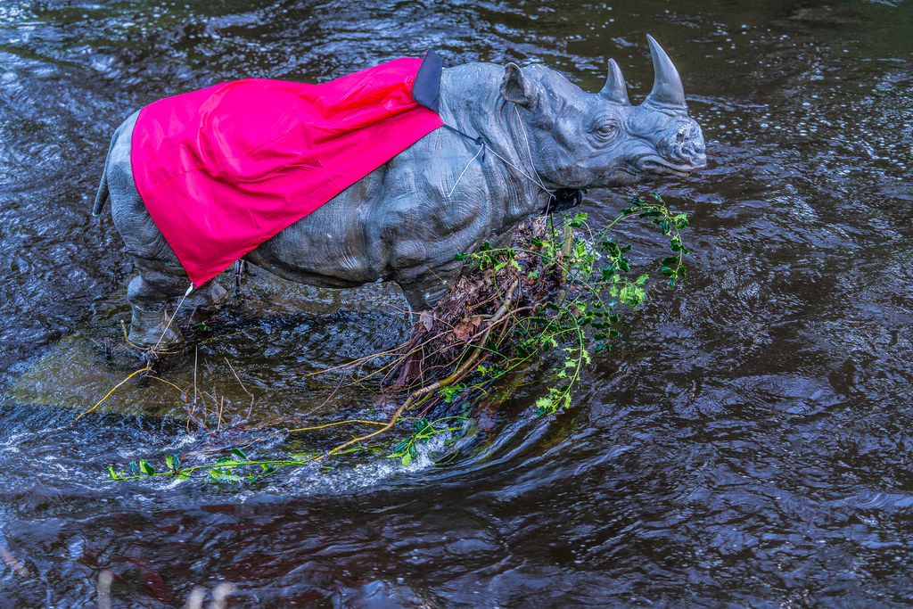 RHINO IN THE RIVER 002